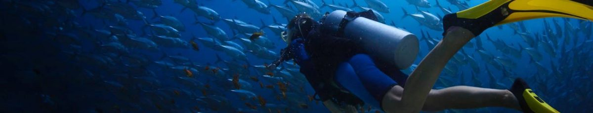 man scuba diving with school of fish